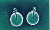 analisi perle istituto gemmologico italiano